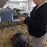 Barn Buddies: 'Have You Seen The Petting Zoo At Bruce Brown's Barn?'