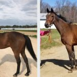 'Rescuing A Horse From A Rescue': NTWO Voices Concerns About Louisiana 'Non-Profit'