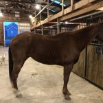 Commentary: The Problem With 'Naming And Shaming' In Horse Rescue