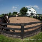 Before You Click 'Donate,' What Do You Know About That Horse Rescue?