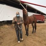 Breeders' Cup Connections: At 91 Years Young, Blue-Collar Trainer Dancing His Way Into The Winner's Circle