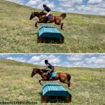 Horowitz On OTTBs, Presented By Excel Equine: Like OTTBs, No Two Snowflakes Are Alike